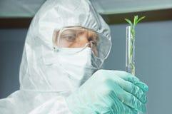 Científico del hombre con la planta verde imágenes de archivo libres de regalías