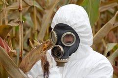 Científico en el campo de maíz Foto de archivo