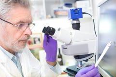 Científico mayor microscoping en laboratorio Imagen de archivo