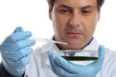 Científico o químico con el plato de petri fotografía de archivo