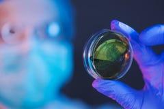 Científico que analiza culturas bacterianas de la placa de Petri en laboratorio imagenes de archivo