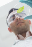 Científico que analiza una hoja en el laboratorio Fotografía de archivo