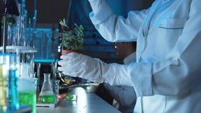 Científico que hace experimentos en una planta almacen de video