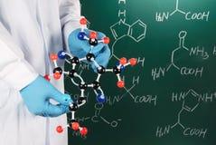Científico que muestra el modelo molecular imagen de archivo