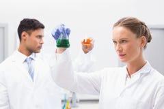 Científicos concentrados que sostienen los cubiletes con el líquido Fotos de archivo