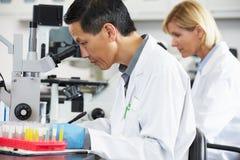 Científicos de sexo masculino y de sexo femenino que usan los microscopios en laboratorio Imágenes de archivo libres de regalías