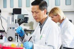 Científicos de sexo masculino y de sexo femenino que usan los microscopios en laboratorio Foto de archivo libre de regalías
