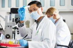 Científicos de sexo masculino y de sexo femenino que usan los microscopios en laboratorio Fotos de archivo libres de regalías