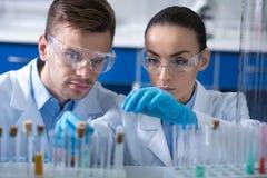 Científicos elegantes serios que se sientan y que trabajan con los frascos cuidadosamente imagenes de archivo