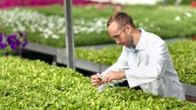 Cientista agrícola masculino que guarda o tubo de vidro com o adubo da amostra que derrama no tiro médio da planta video estoque