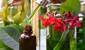 Cientista com pesquisa natural da droga, Botânica orgânica natural e produtos vidreiros científicos, medicina verde alternativa d imagem de stock