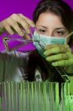 Cientista fêmea Imagem de Stock