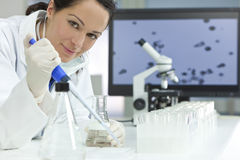 Cientista fêmea com a pipeta no laboratório Foto de Stock Royalty Free
