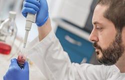 Cientista Filling Test Tubes com a pipeta no laboratório imagens de stock
