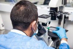 Cientista masculino que olha a cultura celular sob o microscópio fotografia de stock royalty free