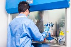 Cientista novo que trabalha do fluxo de ar laminar da segurança em um armário imagem de stock