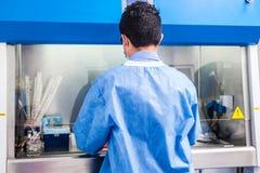 Cientista novo que trabalha do fluxo de ar laminar da segurança em um armário imagem de stock royalty free