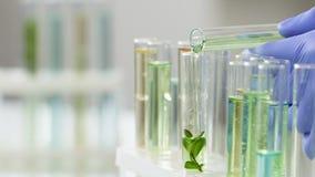 Cientista que adiciona o líquido especial ao tubo de ensaio com fermento para fazer o extrato útil video estoque