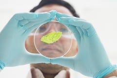 Cientista que analisa uma folha no laboratório Imagens de Stock