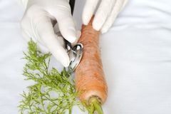 Cientista que examina o alimento insalubre fotografia de stock royalty free