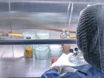 Cientista que faz a microbiologia que testa no armário do fluxo de ar laminar na sala de teste microbiológica do limite Foco sele fotos de stock