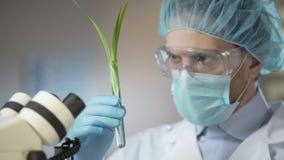 Cientista que olha o germe, feito descoberta científica na biologia, inovação video estoque