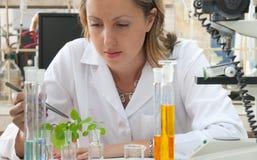 Cientista que pesquisa uma planta verde Fotografia de Stock