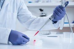 Cientista que processa a amostra do ADN no laboratório Imagens de Stock