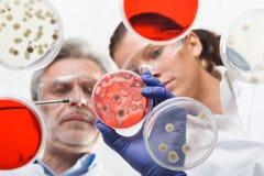 Cientistas de vida que pesquisam no laboratório dos cuidados médicos foto de stock