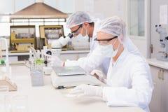 Cientistas que pesam o milho no prato de petri Foto de Stock Royalty Free