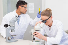 Cientistas que usam o microscópio Imagem de Stock