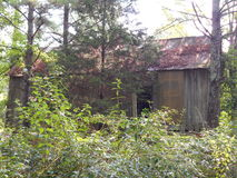 Ciento y casa de cincuenta años rodeados por los árboles de pino Imagenes de archivo