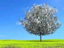 Cientos árboles del dólar en prado Foto de archivo libre de regalías
