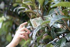 Cientos billetes de dólar en árbol Fotografía de archivo libre de regalías