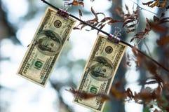 Cientos billetes de dólar pesan pinzas del otoño Foto de archivo libre de regalías