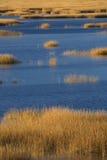Ciepła łuna zmierzch na bagnie przy Milford punktem, Connecticut Zdjęcia Stock