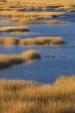 Ciepła łuna zmierzch na bagnie przy Milford punktem, Connecticut Fotografia Stock