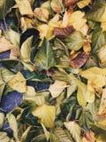 Ciepła jesień Obrazy Stock