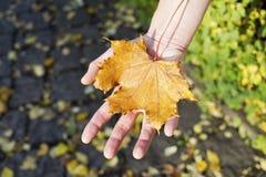 Ciepła jesień Zdjęcia Stock