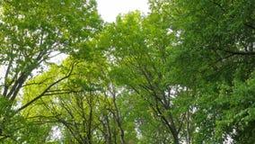 Ciepła jesieni sceneria w lesie z słońcem ciska pięknych promienie światło przez drzew i mgły, Słońce promienie Fotografia Stock