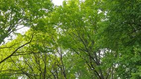 Ciepła jesieni sceneria w lesie z słońcem ciska pięknych promienie światło przez drzew i mgły, Słońce promienie Zdjęcie Royalty Free