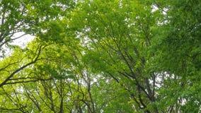 Ciepła jesieni sceneria w lesie z słońcem ciska pięknych promienie światło przez drzew i mgły, Słońce promienie Zdjęcia Royalty Free