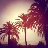 Ciepłe palmy obrazy royalty free