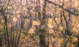 Ciepły żółty złoty koloru brzmienie zamazywał natury tło Obraz Stock