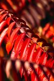 Ciepły jesieni tło Zdjęcia Stock