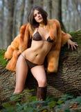 ciepły drewno Zdjęcie Stock