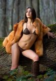 ciepły drewno Zdjęcie Royalty Free