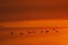 Ciepły jezioro Fotografia Stock
