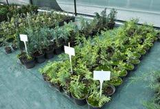 Cieplarnia dla narastających rozsad ornamentacyjni krzaki i drzewa zdjęcia stock
