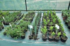 Cieplarnia dla narastaj?cych rozsad ornamentacyjni krzaki i drzewa fotografia stock